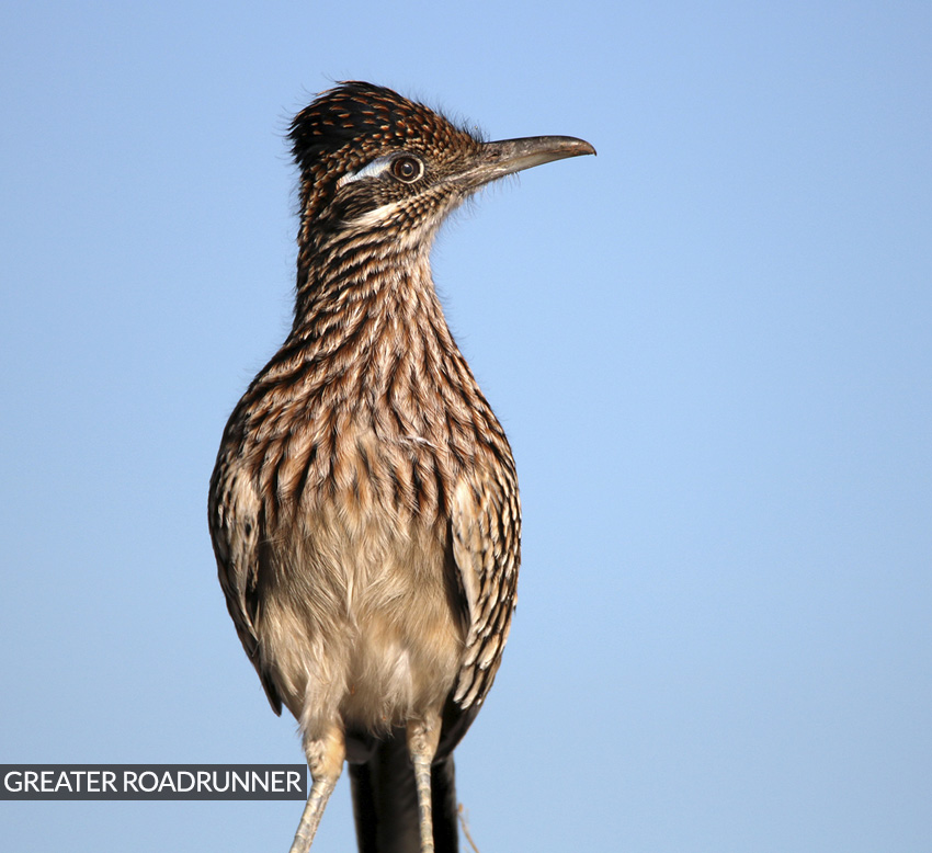 feature-roadrunner