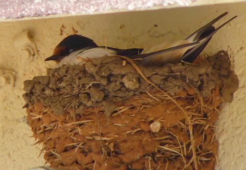 BirdCam Blog