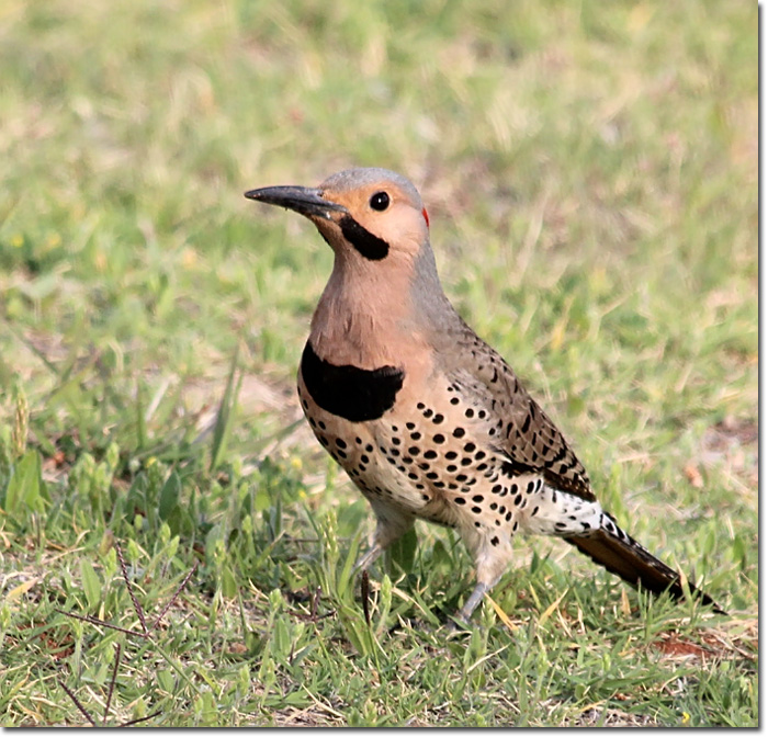 Yellow flicker bird - photo#25
